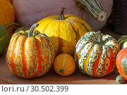 Купить «Осенний натюрморт с различными сортами тыкв на деревянном столе», фото № 30502399, снято 17 сентября 2018 г. (c) Татьяна Белова / Фотобанк Лори