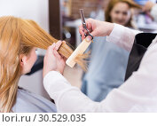 Купить «Hairdressing cutting and leveling hair to young blonde woman by means of scissors and hairbrush», фото № 30529035, снято 7 марта 2017 г. (c) Яков Филимонов / Фотобанк Лори