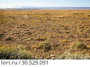Купить «Views of steppe landscape of Pampas, Argentina», фото № 30529091, снято 31 января 2017 г. (c) Яков Филимонов / Фотобанк Лори