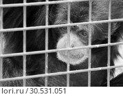 Купить «Monkey in cage», фото № 30531051, снято 3 июня 2008 г. (c) Tryapitsyn Sergiy / Фотобанк Лори