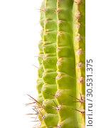 Купить «Green cactus», фото № 30531375, снято 2 июля 2010 г. (c) Tryapitsyn Sergiy / Фотобанк Лори