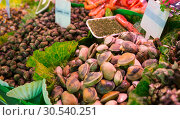 Купить «Assorted mollusks», фото № 30540251, снято 6 июля 2013 г. (c) Tryapitsyn Sergiy / Фотобанк Лори