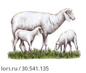 A sheep and two lambs stand on the grass. Стоковая иллюстрация, иллюстратор Татьяна Трощева / Фотобанк Лори