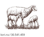 Painted sheep and standing next to two lambs. Стоковая иллюстрация, иллюстратор Татьяна Трощева / Фотобанк Лори