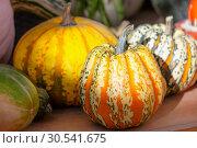 Купить «Осенний натюрморт с яркими тыквами на деревянном столе», фото № 30541675, снято 17 сентября 2018 г. (c) Татьяна Белова / Фотобанк Лори
