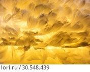 Купить «Orchid wing closeup», фото № 30548439, снято 29 мая 2014 г. (c) Tryapitsyn Sergiy / Фотобанк Лори