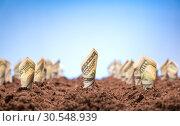 Купить «American dollars grow from the ground», фото № 30548939, снято 23 июля 2014 г. (c) Tryapitsyn Sergiy / Фотобанк Лори