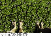 Купить «Feet standing on the cracked land», фото № 30549979, снято 4 сентября 2013 г. (c) Tryapitsyn Sergiy / Фотобанк Лори