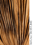 Купить «Old book», фото № 30551843, снято 21 октября 2011 г. (c) Tryapitsyn Sergiy / Фотобанк Лори