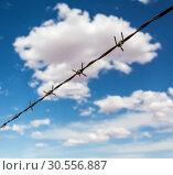Купить «Barbed wire againdt blue cloudy sky.», фото № 30556887, снято 25 июня 2016 г. (c) Tryapitsyn Sergiy / Фотобанк Лори