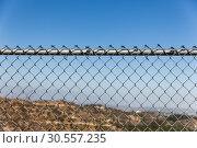 Купить «Rusty fence rabitz on the background of sky.», фото № 30557235, снято 12 июля 2016 г. (c) Tryapitsyn Sergiy / Фотобанк Лори