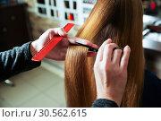 Купить «Cutting of hair with scissors and comb.», фото № 30562615, снято 28 сентября 2016 г. (c) Tryapitsyn Sergiy / Фотобанк Лори