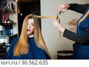Купить «Hairdressing with scissors and comb.», фото № 30562635, снято 28 сентября 2016 г. (c) Tryapitsyn Sergiy / Фотобанк Лори