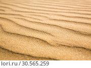 Купить «Sandy waves, beach on Ceylon coast», фото № 30565259, снято 21 февраля 2017 г. (c) Tryapitsyn Sergiy / Фотобанк Лори