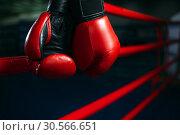 Купить «Gloves on the ring ropes, boxing concept, nobody», фото № 30566651, снято 19 мая 2017 г. (c) Tryapitsyn Sergiy / Фотобанк Лори
