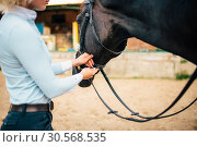 Купить «Female rider keeps the horse for a reason», фото № 30568535, снято 17 сентября 2017 г. (c) Tryapitsyn Sergiy / Фотобанк Лори