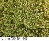 Купить «Natural background from the forest in the daytime. Aerial view of the drone as a layout for your ideas. Top view», фото № 30594443, снято 28 июля 2018 г. (c) Ярослав Данильченко / Фотобанк Лори