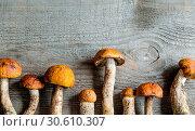 Купить «Orange-cap boletus mushrooms», фото № 30610307, снято 3 августа 2013 г. (c) easy Fotostock / Фотобанк Лори