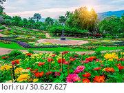 Garden flowers, Mae fah luang garden locate on Doi Tung in Chiang Rai,Thailand. Стоковое фото, фотограф gutarphotoghaphy / easy Fotostock / Фотобанк Лори