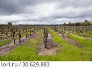 Купить «Flooded vineyard with standing water on the ground next to the grape vines and cloudy rain clouds above in Sonoma Valley California.», фото № 30629883, снято 5 апреля 2019 г. (c) easy Fotostock / Фотобанк Лори