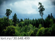 Forest with dramatic sky. Стоковое фото, фотограф sumners / easy Fotostock / Фотобанк Лори