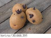 Купить «Три проросшие картофелины сорта синеглазка», фото № 30666391, снято 28 апреля 2019 г. (c) Александр Романов / Фотобанк Лори