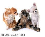 Купить «Kid and dogs», фото № 30671551, снято 2 февраля 2018 г. (c) easy Fotostock / Фотобанк Лори