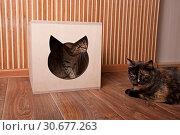 Купить «Two cats and the cat house», фото № 30677263, снято 18 марта 2019 г. (c) Наталья Двухимённая / Фотобанк Лори