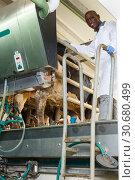 Купить «Farm milkmaid man in bathrobe in barn standing near cow at farm», фото № 30680499, снято 8 августа 2018 г. (c) Яков Филимонов / Фотобанк Лори