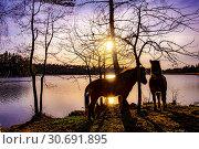Купить «Silhouet of two horses at a lake during sunset, Sweden.», фото № 30691895, снято 21 апреля 2019 г. (c) age Fotostock / Фотобанк Лори