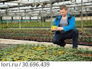 Купить «Male supervising growth of tomato seedlings», фото № 30696439, снято 9 апреля 2019 г. (c) Яков Филимонов / Фотобанк Лори
