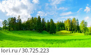 Купить «Forest spring landscape - dense forest trees in the valley in sunny weather, panoramic scene of spring nature», фото № 30725223, снято 21 сентября 2017 г. (c) Зезелина Марина / Фотобанк Лори