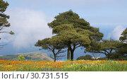 Купить «Delightful spring landscape of Sicilian nature with clouds passing by trees», видеоролик № 30731515, снято 10 мая 2019 г. (c) Алексей Кузнецов / Фотобанк Лори