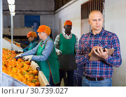 Купить «Serious owner of fruit warehouse checking work of female employees engaged in tangerines sorting», фото № 30739027, снято 15 декабря 2018 г. (c) Яков Филимонов / Фотобанк Лори