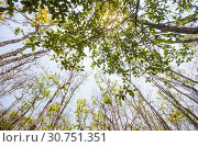 Купить «Low angle of sunlight through the trees come down in the daytime.», фото № 30751351, снято 10 апреля 2016 г. (c) easy Fotostock / Фотобанк Лори