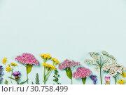 Купить «Flower composition: wild healing flowers on blue background», фото № 30758499, снято 15 июня 2018 г. (c) easy Fotostock / Фотобанк Лори