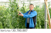 Купить «Farmer controlling process of growing of beans in glasshouse», видеоролик № 30780887, снято 26 апреля 2019 г. (c) Яков Филимонов / Фотобанк Лори