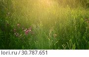 Купить «Beautiful summer landscape with grass at sunset. Russia», видеоролик № 30787651, снято 28 июня 2018 г. (c) Володина Ольга / Фотобанк Лори