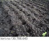 Купить «Небольшие ямки в почве, сделанные для посадки», фото № 30788643, снято 11 октября 2018 г. (c) Вячеслав Палес / Фотобанк Лори