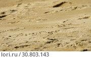 Купить «Crab on the sandy beach», видеоролик № 30803143, снято 31 марта 2019 г. (c) Игорь Жоров / Фотобанк Лори