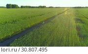 Купить «Aerial view on young boy, that rides a bicycle thru a wheat grass field on the old rural road. Sunlight and beams.», видеоролик № 30807495, снято 19 мая 2019 г. (c) Александр Маркин / Фотобанк Лори