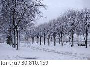Купить «Заснеженная аллея в Санкт-Петербурге», фото № 30810159, снято 10 января 2015 г. (c) Светлана Колобова / Фотобанк Лори
