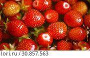 Купить «Background of organic natural fresh ripe strawberry», видеоролик № 30857563, снято 2 июня 2019 г. (c) Peredniankina / Фотобанк Лори