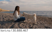 Young girl in a white sweater trains her fluffy shiba inu puppy on the sea coast and feed him during sunrise time slow motion. Стоковое видео, видеограф Denis Mishchenko / Фотобанк Лори