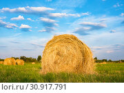 Hay bale. Agriculture field with sky. Rural nature in the farm land. Стоковое фото, фотограф Papoyan Irina / Фотобанк Лори
