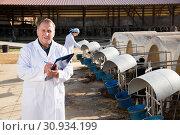 Купить «Man veterinarian inspecting cows», фото № 30934199, снято 24 октября 2017 г. (c) Яков Филимонов / Фотобанк Лори