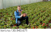 Купить «Positive male worker examining begonia seedlings while gardening in glasshouse», видеоролик № 30943671, снято 26 апреля 2019 г. (c) Яков Филимонов / Фотобанк Лори