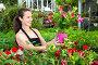 Купить «Female florist cultivating Dipladenia (Mandevilla) in greenhouse», фото № 30951227, снято 18 июня 2019 г. (c) Яков Филимонов / Фотобанк Лори