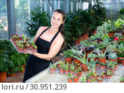 Купить «Positive woman holding a tray with cactuses in orangery», фото № 30951239, снято 22 июля 2019 г. (c) Яков Филимонов / Фотобанк Лори