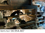 Gervasoni: Baresi water mill, Roncobello, Lombardy, Italy. Стоковое фото, фотограф Bluered / age Fotostock / Фотобанк Лори